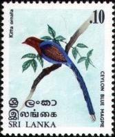 Blauwe Kitta, Urocissa ornata