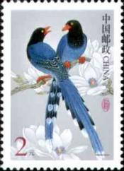 Formosa-Kitta, Urocissa caerulea