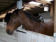 Op de rug van een paard