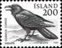 Raaf, Corvus corax